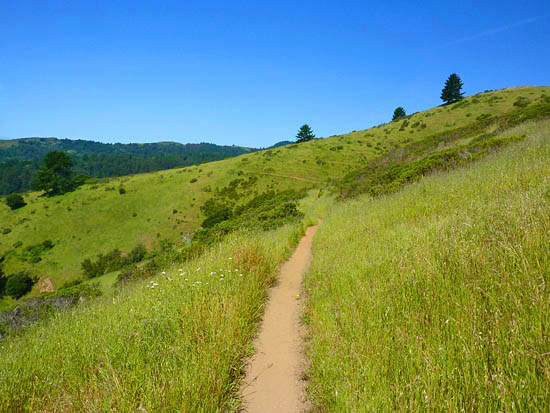 Grasslands cover the interior coastal hills of the Dipsea Trail