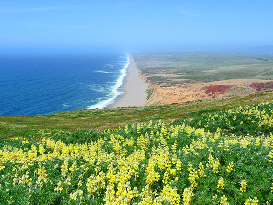 View of the Great Beach from Point Reyes Lighthouse